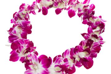 Recepção tradicional com colar de boas-vindas havaiano