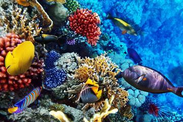 Oahu Certified Scuba Diving Tour