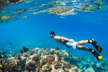 Crucero de buceo de superficie con delfines en la costa Waianae y...
