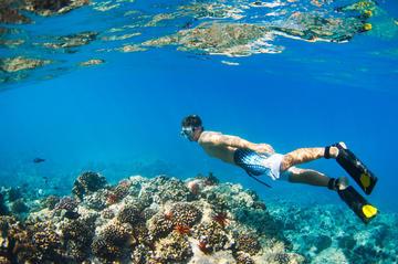 Snorkelkryssning längs Waianaes kust med delfinskådning och ...