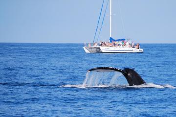 """Bootstour """"Mit den Walen aufwachen"""""""