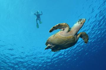 Cruzeiro com mergulho de snorkel em Big Island ao longo da costa de...
