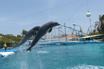 Waterland - Swimming with Dolphins