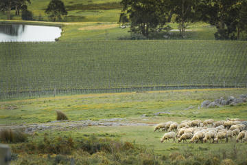 Fowles Wine: Heritage Farm Tour with Wine Tasting and Lunch