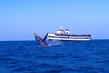 Whale Watching Cruise in San Diego