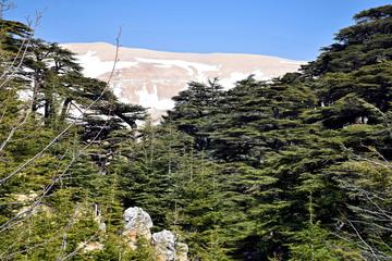 Cedars Forest Hiking (full day)