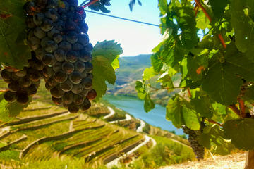 Traditional Douro Valley & Wine Tour - Small Group