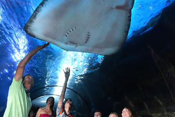 Maui Ocean Center Admission Packages