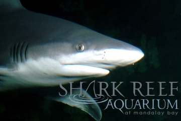 Shark Reef au Mandalay Bay Hotel and...