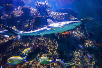 Shark Reef en el Mandalay Bay Hotel...