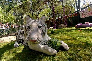 Siegfried & Roy's Secret Garden...