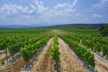 Wine Wanderlust, Herzegovinas Most Famous Wines Tour