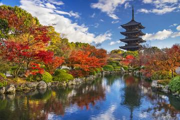 Viator VIP: To-ji Temple Tour in Kyoto