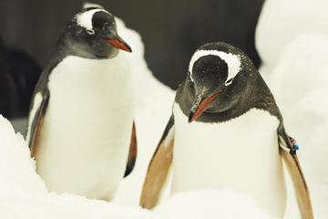シー ライフ メルボルン水族館のペンギン パス…