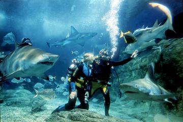 Experiência de mergulho com tubarões no Aquário de Melbourne SEA LIFE