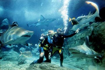 Experiencia de submarinismo con tiburones en el acuario SEA LIFE...