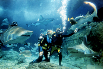 Plongée avec les requins à l'Aquarium SEA LIFE de Melbourne