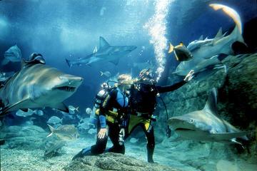 SEA LIFEメルボルン水族館でのシャークダ…