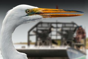 Visite nocturne des Everglades de Floride en hydroglisseur au départ...
