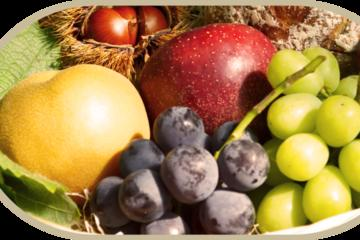 Choudo-gari-  Picking Fruits of the Season
