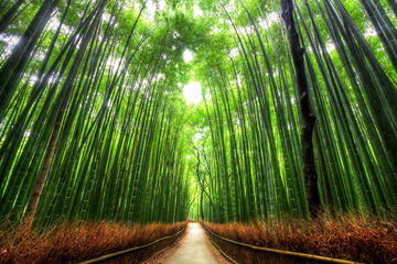 Mystery Tour Meeting 1000 Jizo in Arashiyama