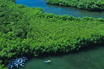 Best of Mangrove Lagoon Adventure