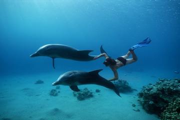 Dolphin House Sea Trip Hurghada