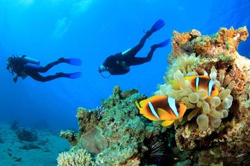 Scuba Diving Trip Around Giftun Island