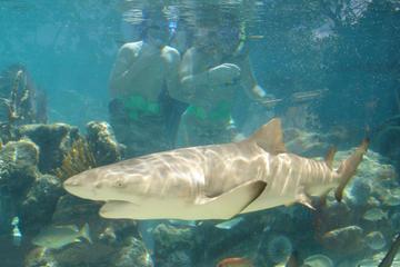 Excursión por la costa St Thomas: Baño con tiburones en Coral World...