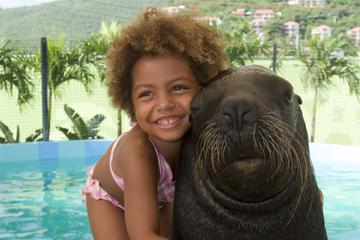 Sea Lion Encounter at Coral World...