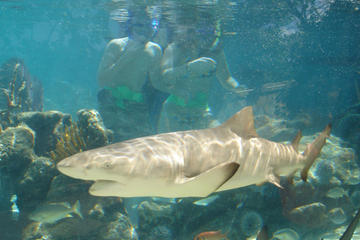 St Thomas Shore Excursion: Swimming with Sharks at Coral World Ocean...
