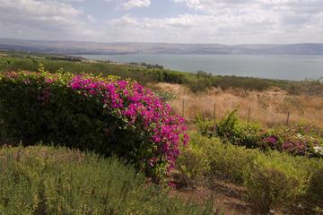 Excursão terrestre de Haifa: excursão de um dia privada de Nazaré e...