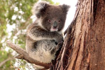 Island Life - Full Day Kangaroo Island Wildlife Tour
