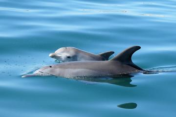 90-Minute Dolphin Discovery Centre Eco Cruise