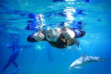 Dolphin Discovery Centre Swim Tour