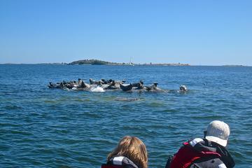 Stockholm Archipelago Seal Safari
