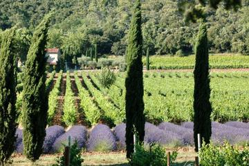 Full-Day Wine Tour around Luberon from Marseille