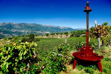 Wine Tour in Bellet wine region with free time in Nice - from Cannes