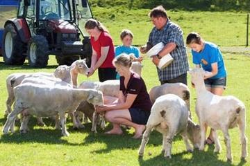 Spectacle de moutons à l'Agrodome et visite d'une ferme