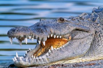 Luftbåtsäventyr i Miamis Everglades med transport