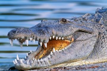 Miami Everglades Airboat-Abenteuer...