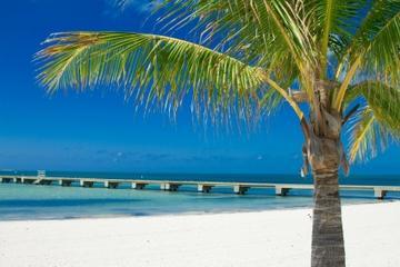 Passeio de barco e mergulho com snorkel em Key West a partir de Miami