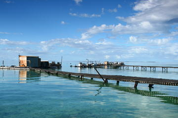 Full Day Guided Abrolhos Fly and...