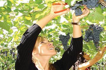 Deluxe Mendoza Half-Day Wine Tasting Tour