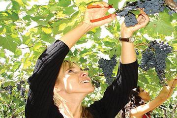 Excursão de meio dia de degustação de vinho Mendoza Deluxe