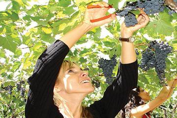 Visita de lujo de medio día con cata de vinos a Mendoza