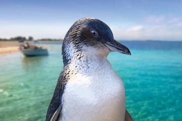 croisiere-a-la-decouverte-de-penguin-island