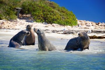 Visite de Penguin Island avec croisière à la découverte des dauphins...