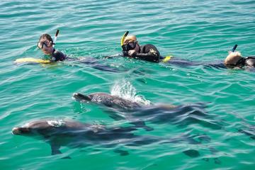 パース発:イルカと泳ぐ日帰りツアー