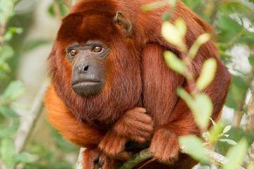 3-Day Amazon Jungle Tour at Hacienda Concepción